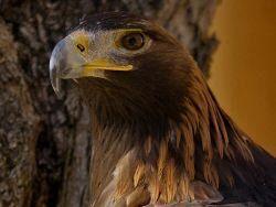 © Greifvogelpark Wunsiedel