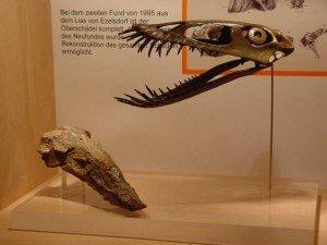 © Fossilienmuseum Fürth