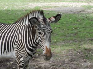 zoo-augsburg1