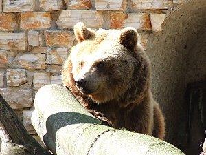 zoo-augsburg6