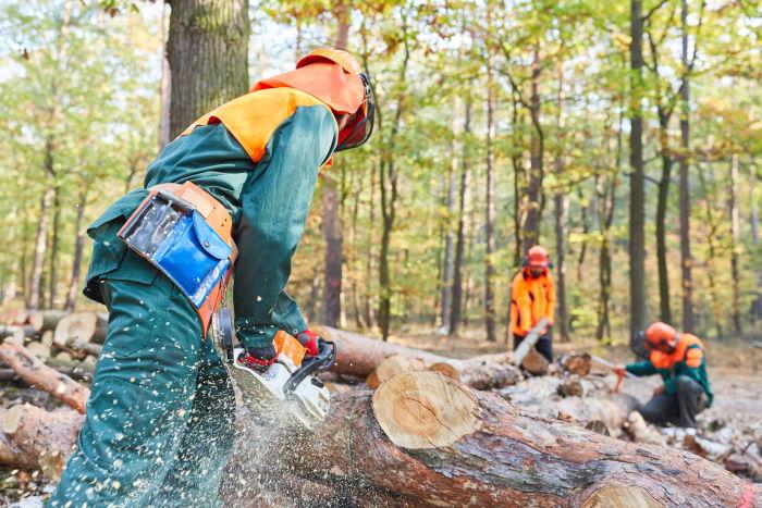 Schutzkleidung Waldarbeiter